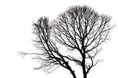Silhouettes d'arbre mort sans feuilles Image stock