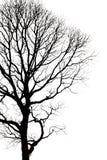 Silhouettes d'arbre mort sans feuilles Photographie stock