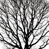 Silhouettes d'arbre mort sans feuilles Photo libre de droits
