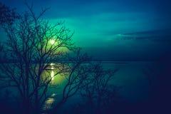 Silhouettes d'arbre sec contre le ciel et le nuage au-dessus de la mer tranquille image libre de droits