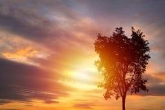 Silhouettes d'arbre sur le fond de coucher du soleil Image stock