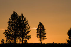 Silhouettes d'arbres Photos stock