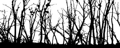 Silhouettes d'arbres Photo libre de droits