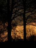 Silhouettes d'arbres - 2 Photos libres de droits