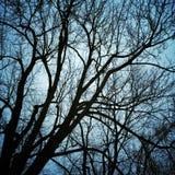 Silhouettes d'arbres dans le clair de lune photos stock