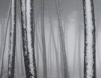 Silhouettes d'arbres en hiver photo stock