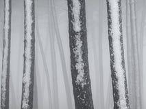Silhouettes d'arbres en hiver photographie stock libre de droits