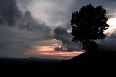 Silhouettes d'arbres sur le coucher du soleil de paysage de montagne Photographie stock