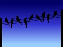 Silhouettes d'oiseau Photo libre de droits