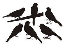 Silhouettes d'oiseau jaune canari Image libre de droits
