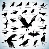 Silhouettes d'oiseaux Photographie stock