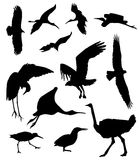 Silhouettes d'oiseaux Image stock