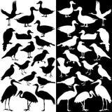 Silhouettes d'oiseaux (noires et blanches) Photos stock
