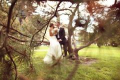 Silhouettes d'un marié et d'une jeune mariée s'asseyant sur un arbre Photo stock