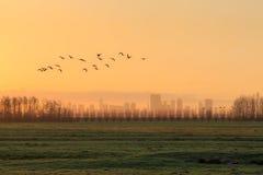 Silhouettes d'un troupeau des gees volant au lever de soleil devant l'horizon de Rotterdam Images libres de droits
