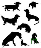 Silhouettes of dachshunds. Vector illustration. Stock Photos