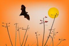 Silhouettes de battes et belle branche pour l'utilisation de fond Images libres de droits