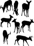 Silhouettes de cerfs communs Photographie stock