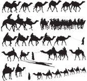 Silhouettes de chameau Images libres de droits