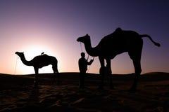 Silhouettes de chameau au lever de soleil Photo stock