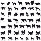 Silhouettes de chiens Photos libres de droits