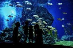 Silhouettes de famille avec deux enfants dans l'oceanarium Photographie stock libre de droits