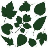 Silhouettes de feuilles Photo stock
