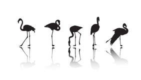 silhouettes de flamant Photo libre de droits