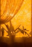 Silhouettes de fleurs sur le rideau Photographie stock