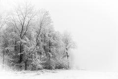 Silhouettes de Forest Tree d'hiver Photographie stock