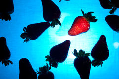 Silhouettes de fraises dans l'eau bleue Photos libres de droits