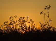SILHOUETTES DE LEVER DE SOLEIL Photo libre de droits