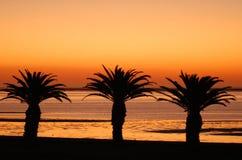 Silhouettes de palmier au coucher du soleil Image libre de droits