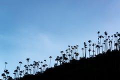 Silhouettes de palmier de cire Photos stock