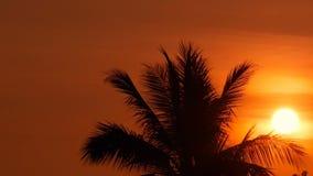 Silhouettes de palmiers sur la plage tropicale au temps vif de coucher du soleil Arbres exotiques et grand soleil orange banque de vidéos