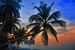 Silhouettes de palmiers sur le fond coloré de ciel Photographie stock