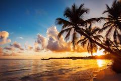 Silhouettes de Palmtree sur la plage tropicale, Punta Cana, Dominique photographie stock