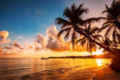 Silhouettes de Palmtree sur la plage tropicale, Punta Cana, Dominique photo libre de droits