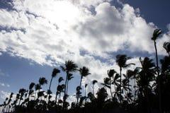 Silhouettes de paume Photographie stock libre de droits