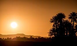 Silhouettes de paume au-dessus de coucher du soleil dans le désert Photo libre de droits