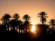 Silhouettes de paume au-dessus de coucher du soleil dans le désert Photographie stock