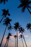 Silhouettes de paume sur le coucher du soleil Photo stock