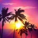 Silhouettes de paume sur le coucher du soleil d'été Image stock