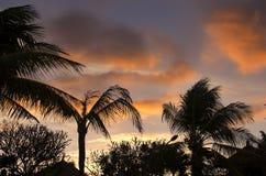 Silhouettes de paumes Photo libre de droits
