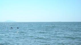 Silhouettes de personnes sur le ski de jet et le bateau de banane banque de vidéos