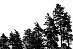 Silhouettes de pin d'isolement sur le blanc Image libre de droits