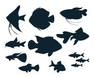Silhouettes de poissons d'aquarium Photo stock