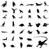 silhouettes de reptile Images libres de droits