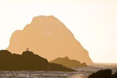 Silhouettes de roche, coucher du soleil de côte de l'Orégon Photo libre de droits
