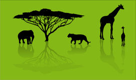 silhouettes de safari d'animaux Photo stock